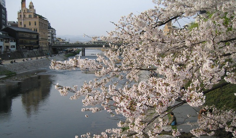 9 Cherry blossoms & the Kamo River in Kyoto, Japan; 鴨川の桜、京都 - Foter - Nullumayulife